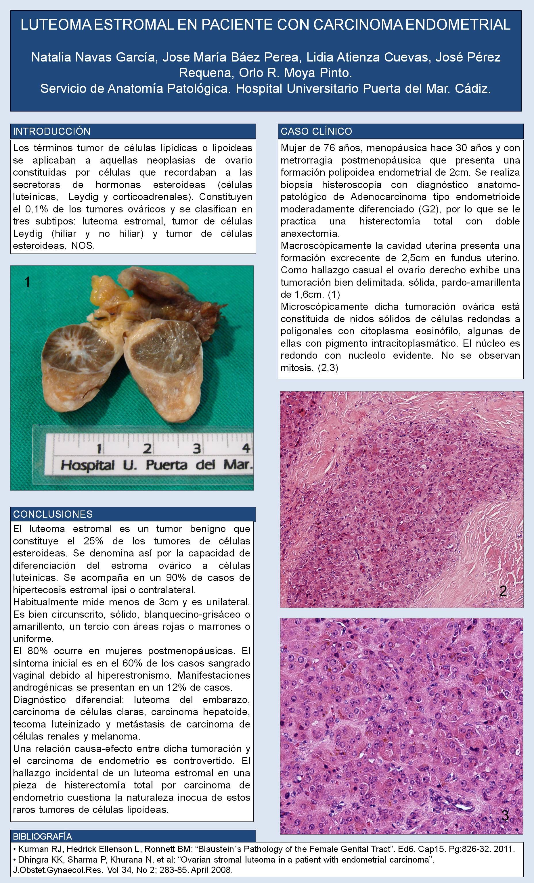 Único Anatomía De Una Puerta Cresta - Imágenes de Anatomía Humana ...